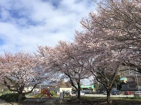 0407akasakura.jpg