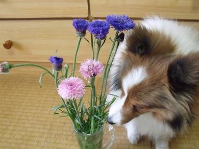 0413flower3.jpg