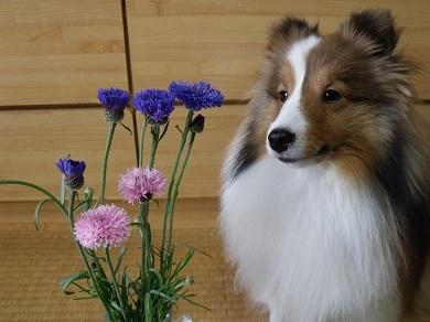0413flower4.jpg