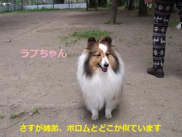 0510dogrun1.jpg