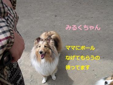 0510dogrun2.jpg
