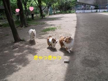 0510dogrun8.jpg