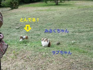 0510niwa3.jpg