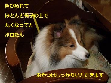0510niwa9.jpg