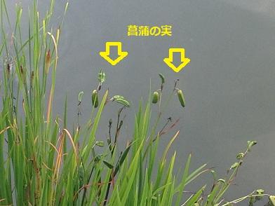0720shoubunomi.jpg