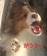 yosei5.jpg